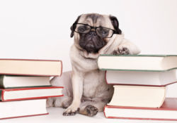 Stress : et si votre animal était concerné ?